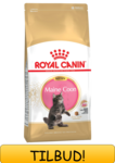 Royal Canin Maine Coon Kitten 4 kg.